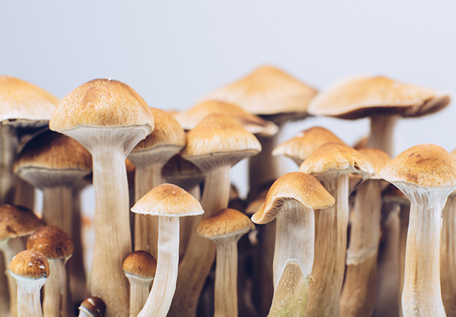 Ele consumiu cogumelos da maneira errada e os fungos tomaram conta de seu sangue