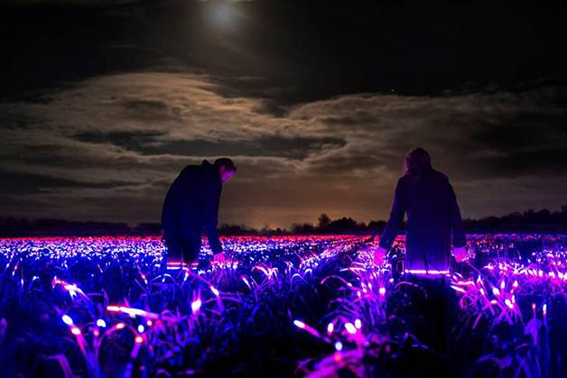 Projeto GROW, iluminando uma plantação na Holanda