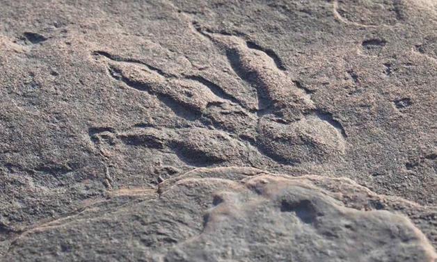 A pegada de dinossauro descoberta por criança no País de Gales