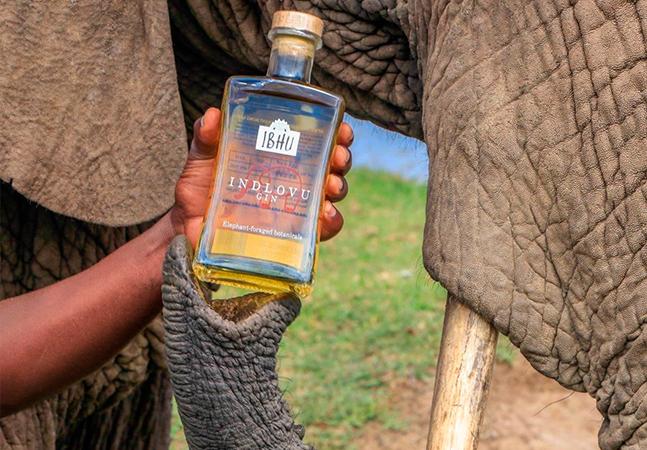 Premiado Gin sul-africano é feito a partir do estrume de elefantes