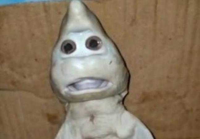'Baby shark'? Suposto Filhote de tubarão assusta por expressões humanas