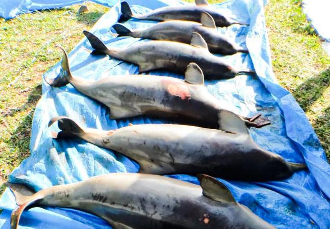 Equipamentos de pesca provocaram mutilações e mortes de animais marinhos em SP
