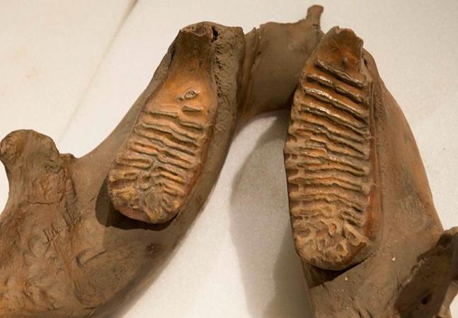 DNA mais antigo do mundo é descoberto e aponta para origem de mamutes na Sibéria