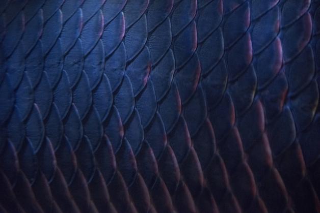 As duras escamas do pirarucu, usadas tradicionalmente até como lixas de unha