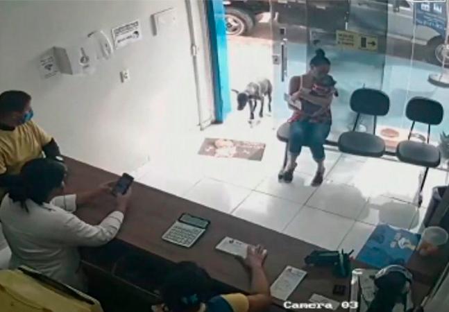 Cão machucado entra sozinho em clínica em busca de ajuda; a boa notícia é que ele conseguiu