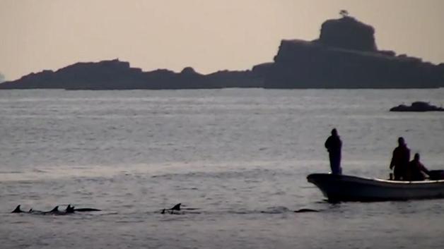 Barco de caça de golfinho