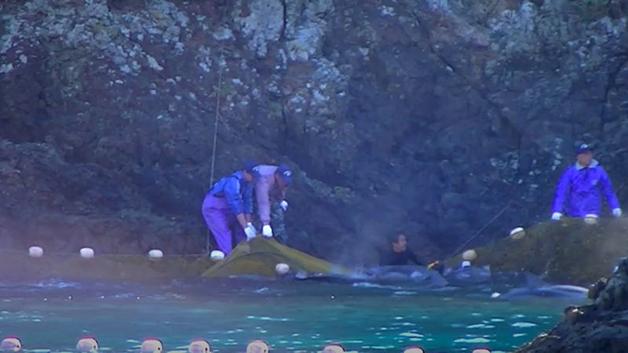 Redes de pesca de golfinho