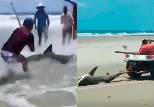 Ibama autua 6 pessoas por tortura que causou morte de tubarão no Ceará