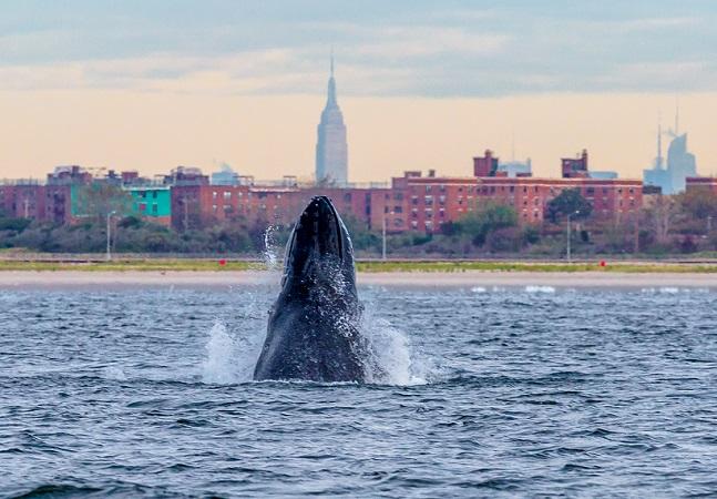 Vida marinha está ameaçada com aumento de ruído nos oceanos; entenda