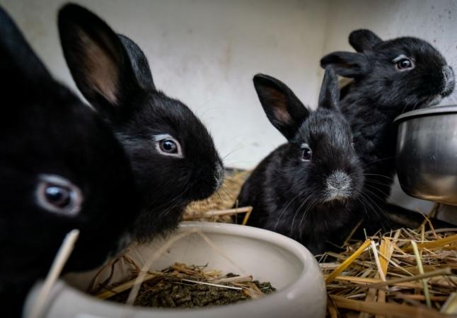 Garnier recebe selo Cruelty-Free por fim de testes com animais