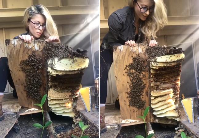 Abelhas são salvas do extermínio por coragem de apicultora; veja vídeo