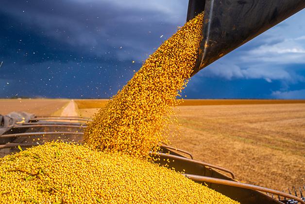 Produção de grãos de soja