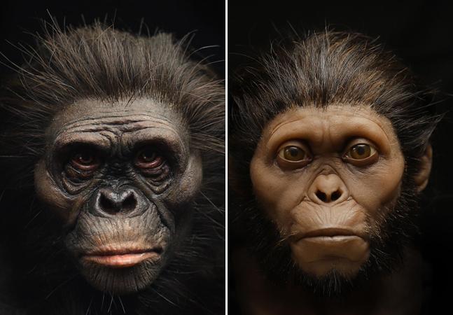 'Lucy', ancestral do ser humano, tem aparência recriada sem influências racistas ou estereotipadas