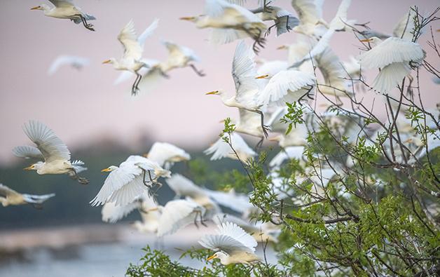 Uma revoada de pássaros na Amazônia