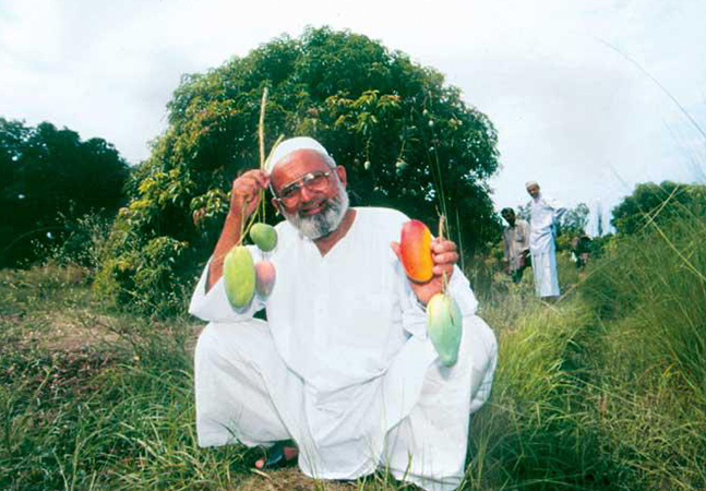 Homem-manga: o horticultor indiano que produz 300 tipos de manga em uma só árvore