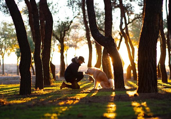 Cachorros e coronavírus: os peludos são grandes aliados em tempos de isolamento