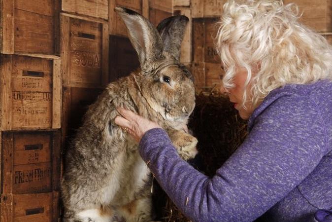 Maior coelho do mundo é roubado em jardim e tutora oferece R$ 7 mil para tê-lo de volta