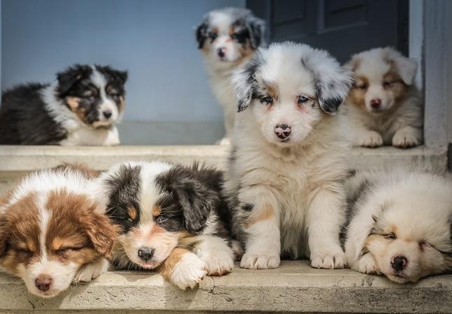 Cachorro filhote: 6 coisas que não podem faltar na casa de quem tem um
