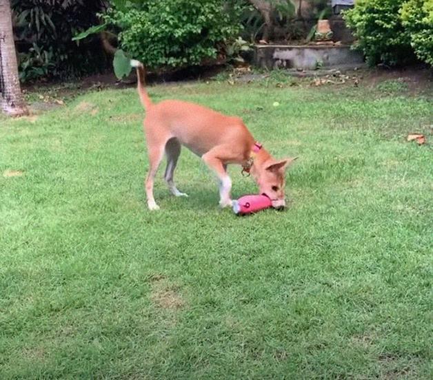 A cadela Mo