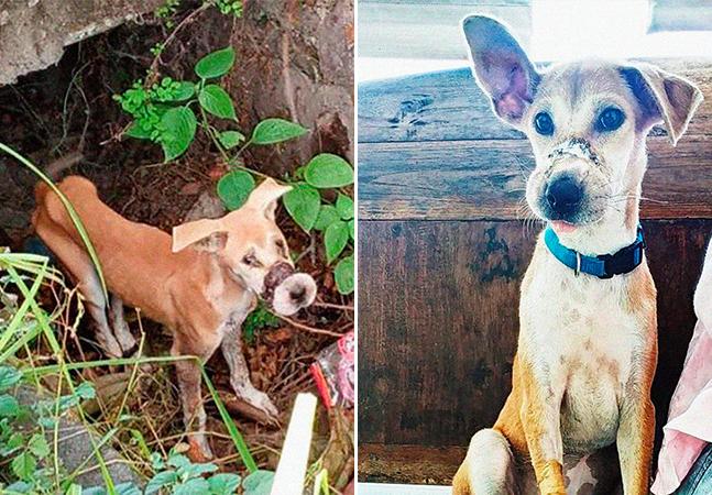 Este cãozinho fugiu de uma fazenda de carne ilegal em Bali e recebeu ajuda para achar um lar