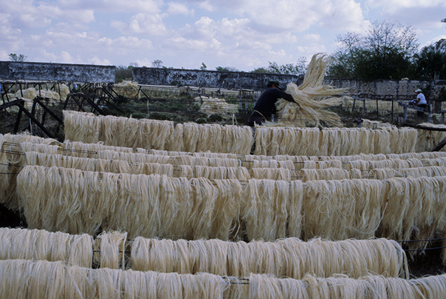 Fibras de cânhamo secando no México