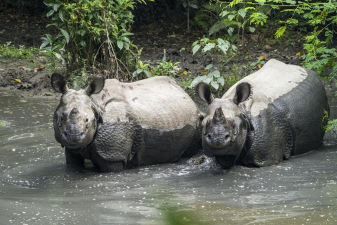 Nepal vê população de rinocerontes aumentar com queda de turismo por pandemia