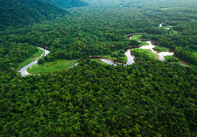 Maioria das espécies que ainda serão descobertas estão em florestas como Amazônia; Brasil lidera ranking