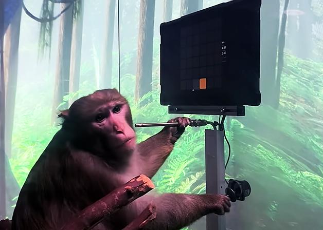 macaco Pager jogando Pong
