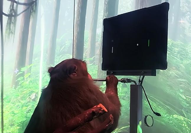 Macaco consegue jogar game utilizando somente o pensamento através de chip de Elon Musk
