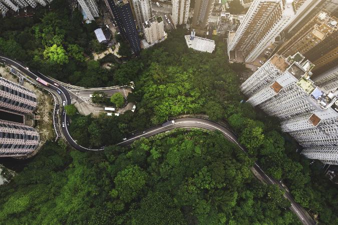 Árvores são parte da infraestrutura de saúde pública, dizem especialistas