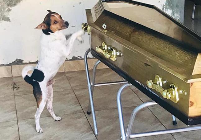 Cachorro se desespera com morte de tutora e permanece ao lado de caixão