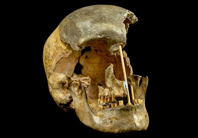 Cientistas descobrem genoma mais antigo de humanos modernos em análise de crânio