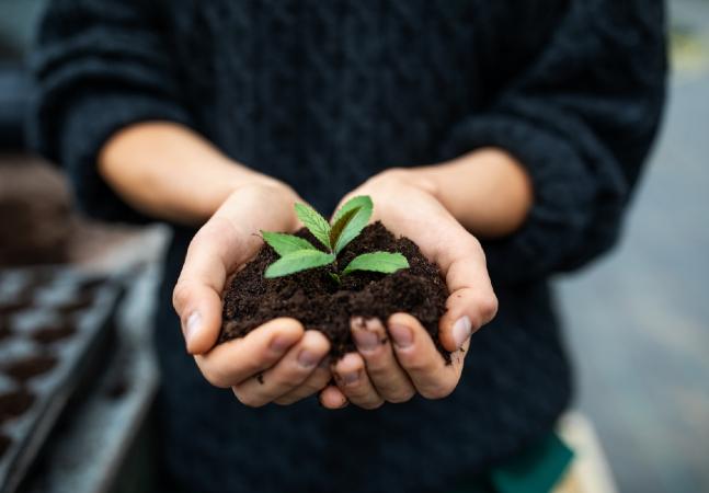 Sustentabilidade ambiental: conceito ganha força com crise dos anos 80