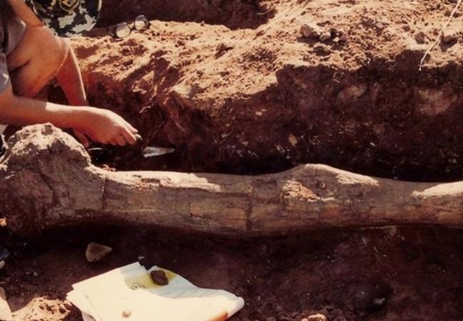 Ciência descobre dinossauro que viveu em São Paulo há milhões de anos