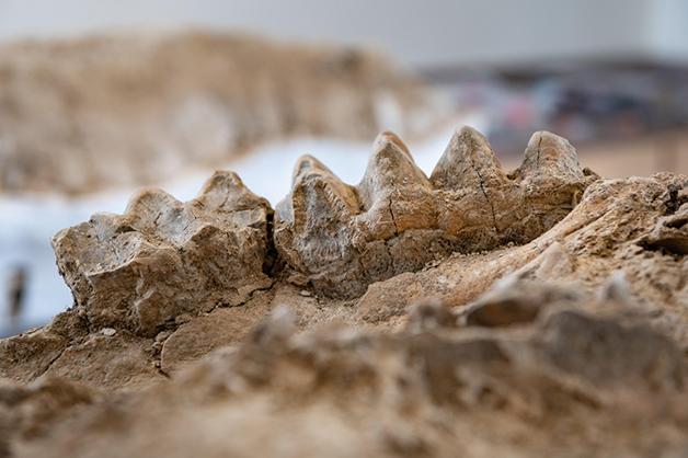Fósseis descobertos na Califórnia