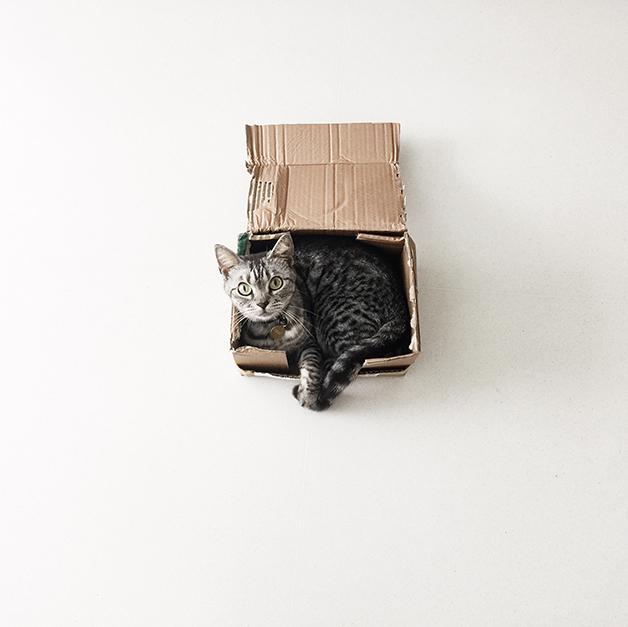 Gato dentro de uma caixa