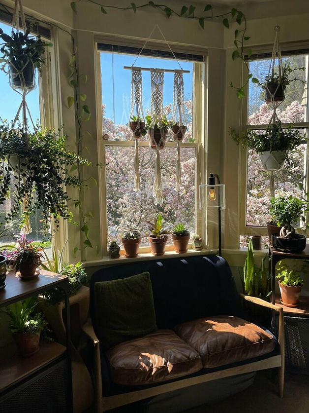 Cantinho com um bom sofá e plantas