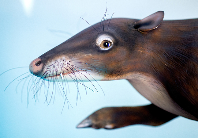 Este pequeno roedor vegetariano foi o ancestral terrestre das baleias