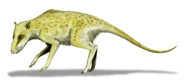 Indohyus