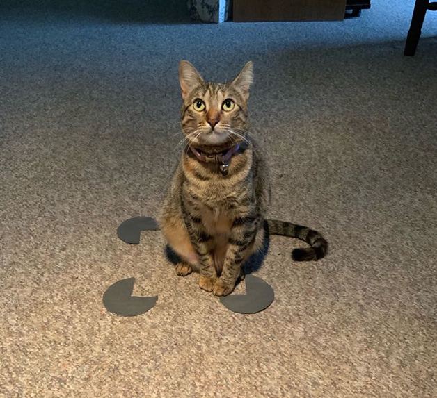 """Outro exemplo de gato que """"caiu"""" na ilusão de ótica quadrada"""