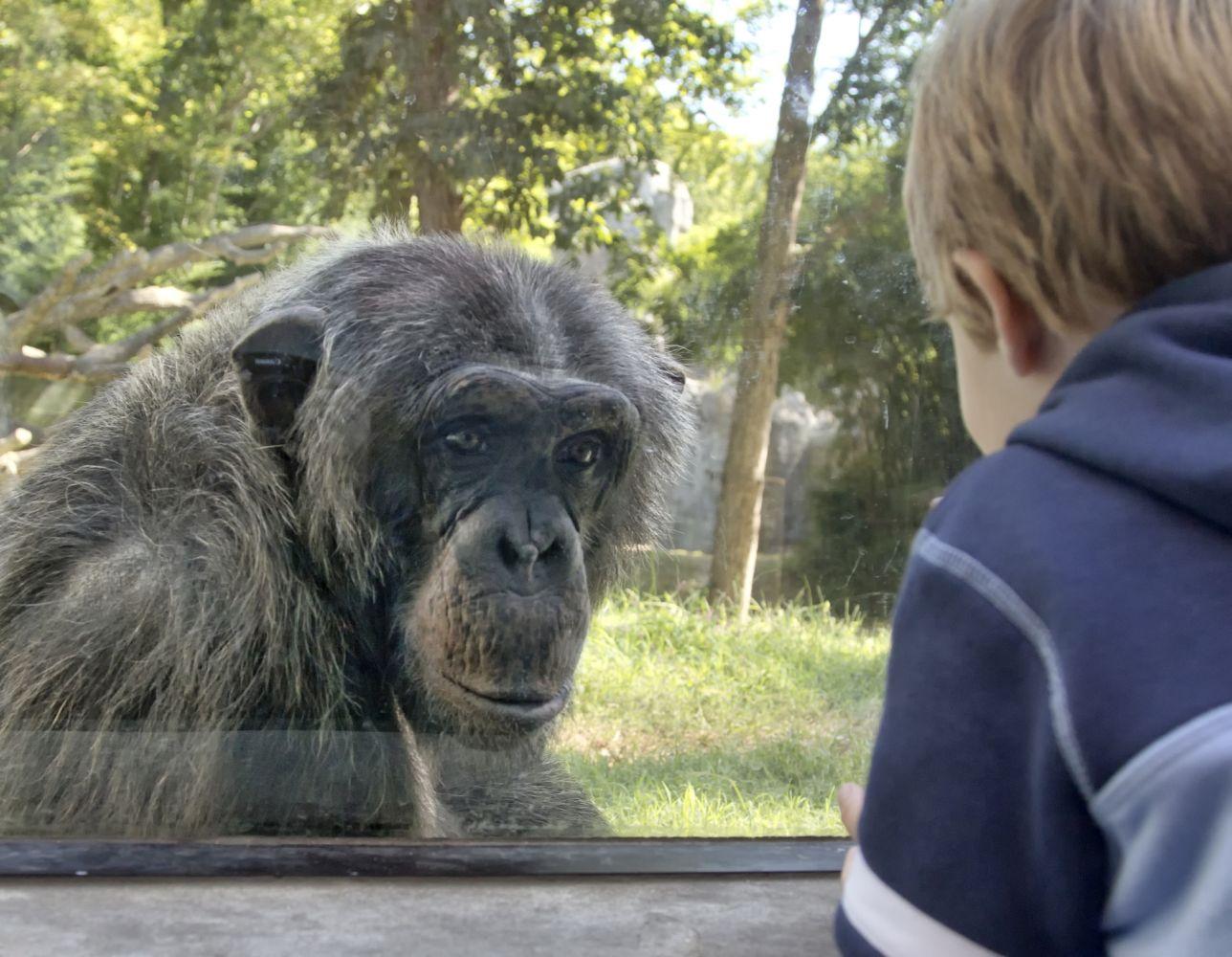 Macaco em zoológico