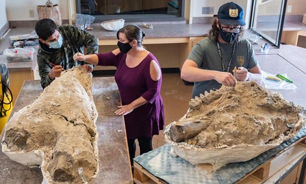 Cientistas da Universidade Estadual da Califórnia trabalhando com alguns dos fósseis descobertos