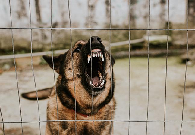 RJ comunica 1º caso de raiva em cachorro em quase três décadas