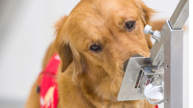 Tala é uma pioneira em matéria de cães farejadores