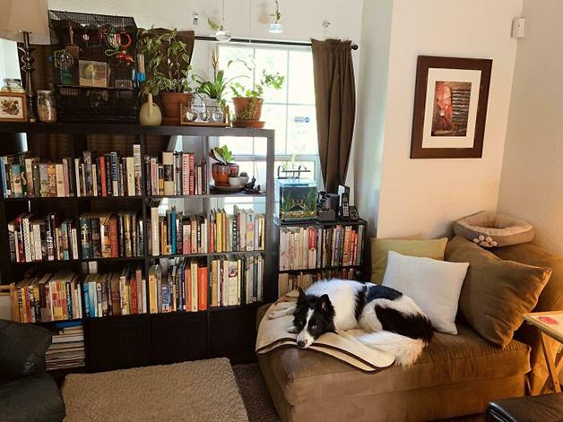 canto de leitura com cachorro