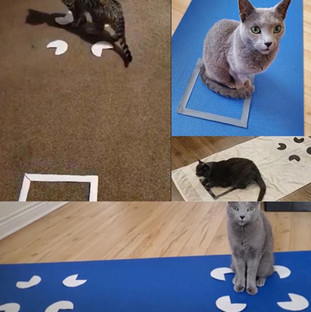 Gatos dentro de quadrados