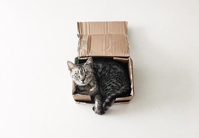 Gatos amam se aninhar em quadrados mesmo se tratando de uma ilusão de ótica, comprova experimento
