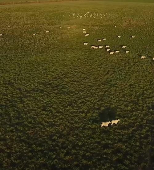 'Amazônia em chamas': doc põe navalha na carne, principal causadora do desmatamento no Brasil