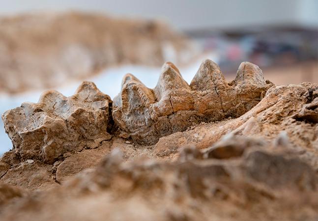 Fósseis de milhões de anos são achados sem querer por guarda-florestal na Califórnia