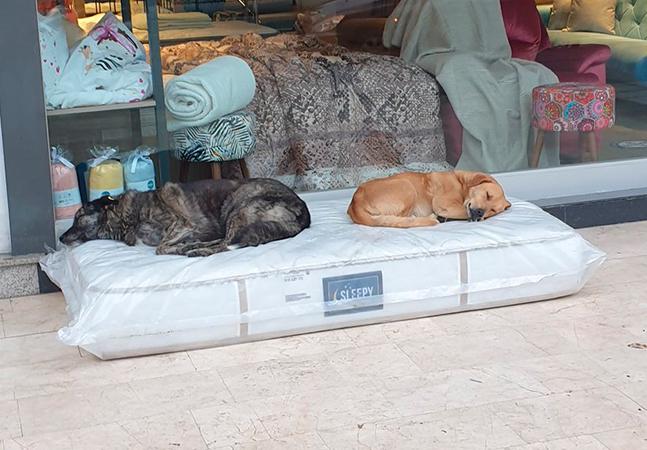 Cachorros ganham colchão para dormir em frente à loja de móveis na Turquia